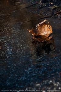 015-leaf-wdsm-13jan14-6291
