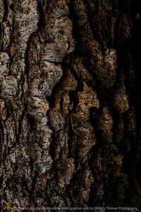 015-tree_bark-wdsm-02sep14-001-9247