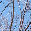 015-bird_woodpecker-wdsm-04jan13-9277