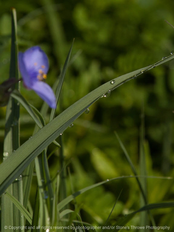 015-water_drops_grass-wdsm-28may13-0643