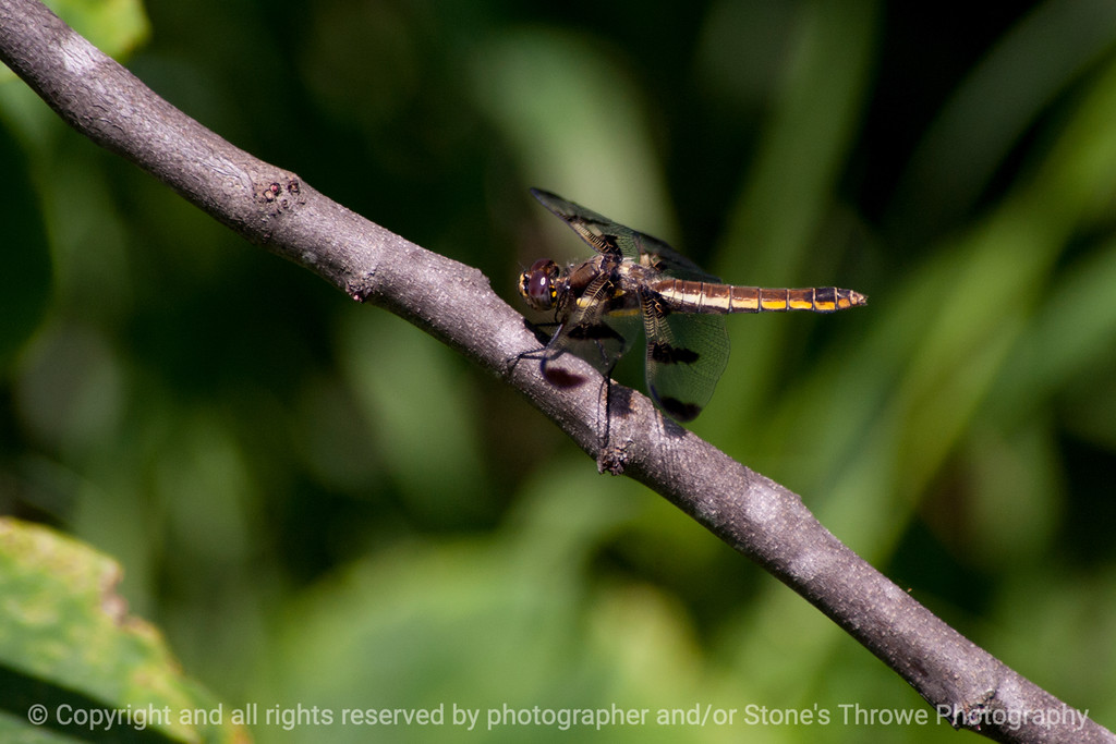 015-dragonfly-wdsm-29jun13-1752