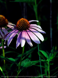 015-flower-wdsm-30jul11-001-0143
