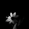 015-flower-wdsm-28jul13-3063