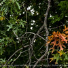 015-leaves_autumn-wdsm-23sep14-11.5x7.5-1913