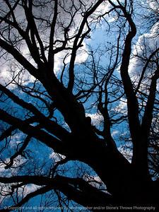 015-tree_sky-wdsm-21apr13-0544