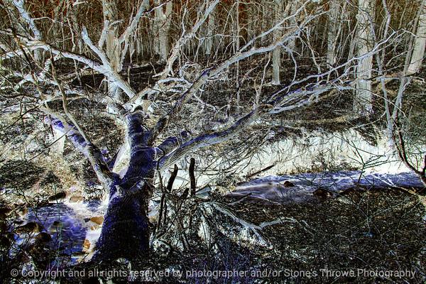 015-tree_fallen-wdsm-23apr18-12x08-208-500-3889