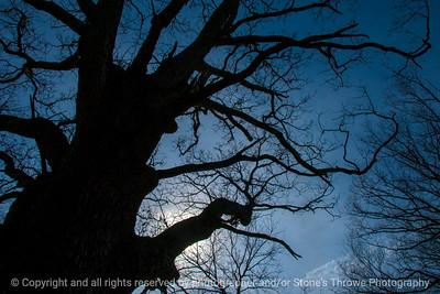 tree-wdsm-06mar16-18x12-003-6890