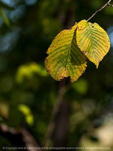 leaf-wdsm-28sep15-09x12-001-5369