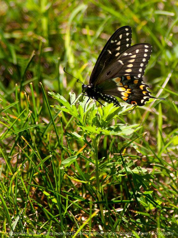 015-butterfly-wdsm-29jun13-1785