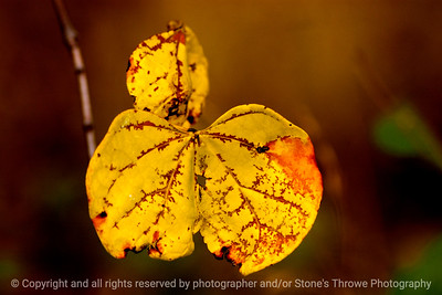 015-leaf_autumn-wdsm-01nov13-1053