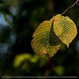 leaf-wdsm-28sep15-12x12-007-5369