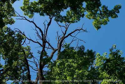 015-tree_branch-wdsm-16jun16-18x12-003-9962
