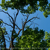 015-tree_branch-wdsm-16jun16-18x12-003-9962