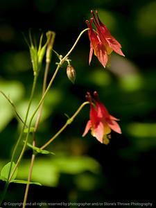 015-flower-wdsm-31may13-0775