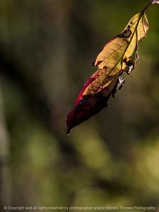 leaf-wdsm-09nov15-09x12-001-5816