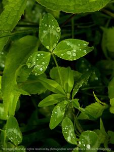 015-leaf-wdsm-30may13-0721