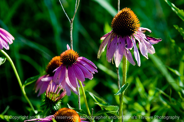 015-flower-wdsm-25jul11-0104