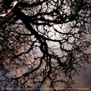 015-tree_reflection-wdsm-28mar12-006-4728