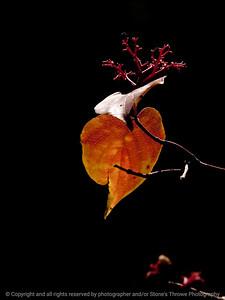 015-botanical-wdsm-25sep12-8402