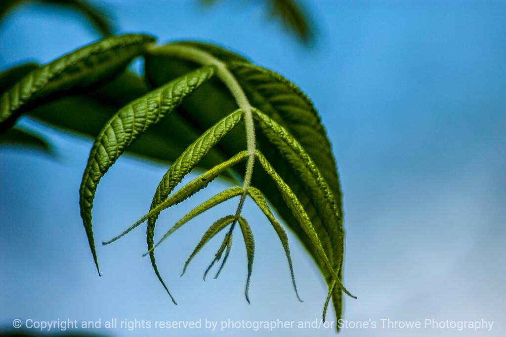 015-leaf-wdsm-26may14-003-1466