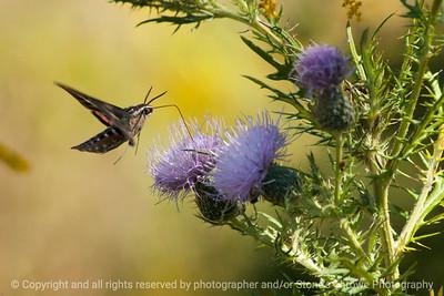 015-moth-wdsm-13sep13-003-0967