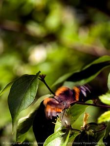 015-butterfly-wdsm-26apr12-5437