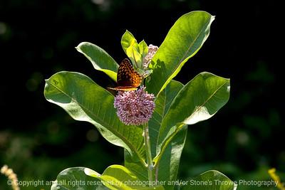 015-butterfly-wdsm-05jul13-1957
