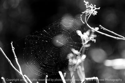 015-spider_web-wdsm-30sep13-bw-4430