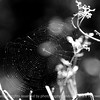 015-spider_web-wdsm-30sep13-bw-4430