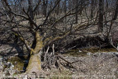 015-tree_fallen-wdsm-23apr18-12x08-008-500-3889