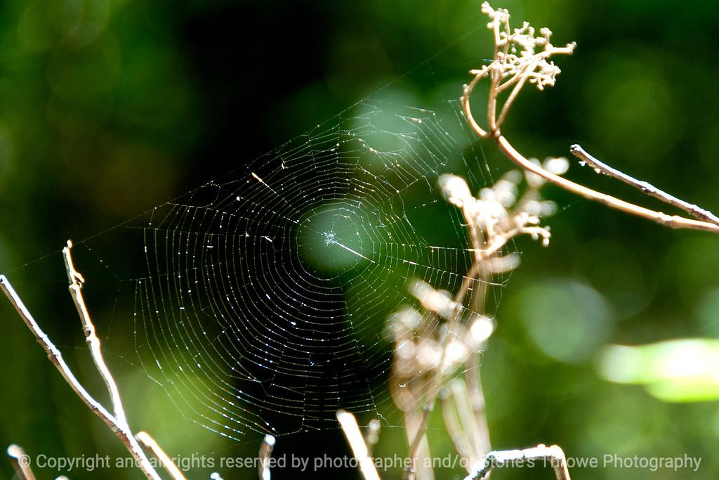 015-spider_web-wdsm-30sep13-4430