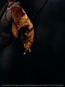 015-leaf-wdsm-22jan12-001-3169