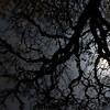 015-tree_reflection-wdsm-28mar12-001-4731