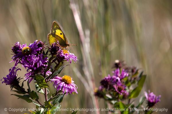 015-butterfly-wdsm-21oct11-1674