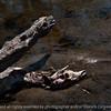 015-deer_carcass-wdsm-14apr16-18x12-003-7542