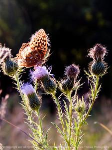 015-butterfly-wdsm-05sep12-7932