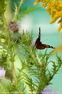 015-butterfly-wdsm-14sep13-4081