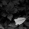 015-leaf-wdsm-20may13-0529