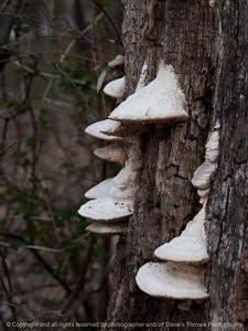 fungi-wdsm-29mar16-09x12-001-7173