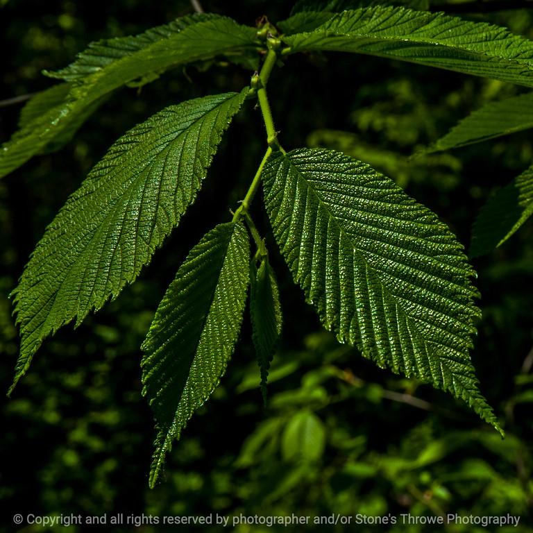 015-leaf-wdsm-23may14-009-7680