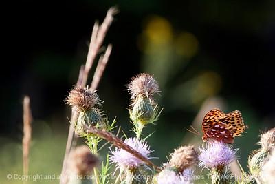 015-butterfly-wdsm-06sep12-003-7949