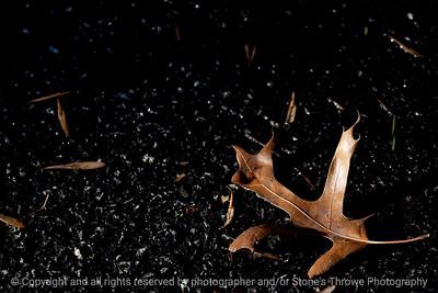 015-leaf-wdsm-13jan14-003-6294
