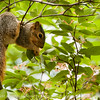 015-squirrel-wdsm-28jul14-003-1765