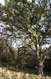 015-tree-wdsm-11oct10-5680