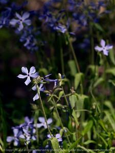 015-flower-wdsm-19may13-0467
