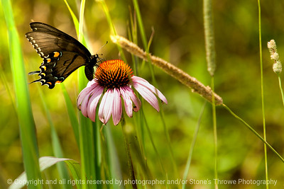 015-butterfly-wdsm-01aug14-003-8936