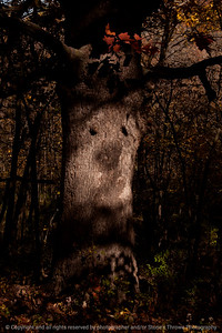 015-tree_face-wdsm-02nov13-5600