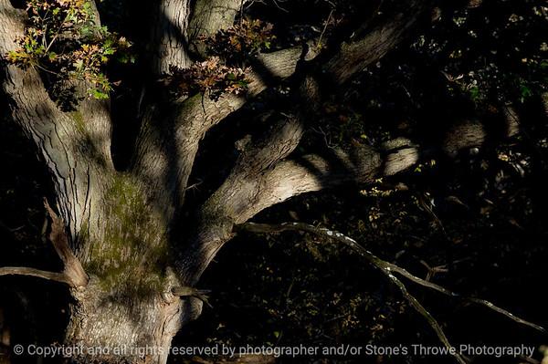 015-tree-wdsm-11oct10-8443