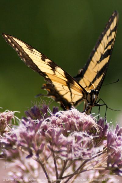 015-butterfly-wdsm-26jul13-0711