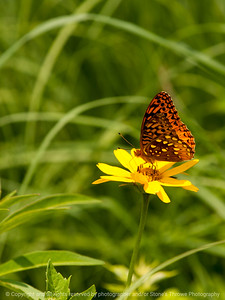 015-butterfly-wdsm-01jul13-1869